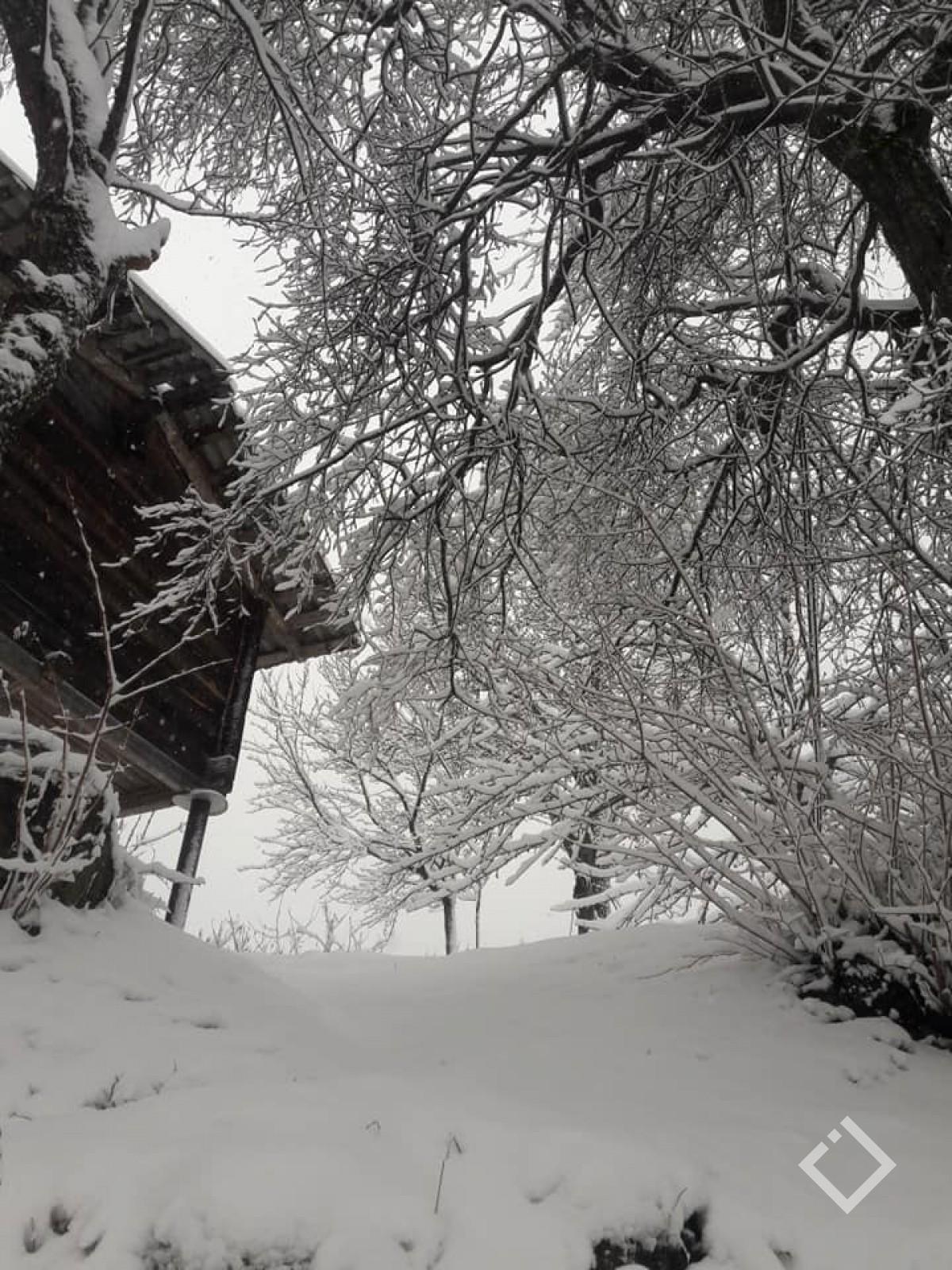 თოვლიანი დღე - შუახევი