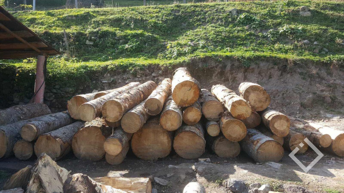 ოქტომბერში, აჭარაში ხე-ტყის უკანონო მოპოვებისა 62 ფაქტი დაფიქსირდა