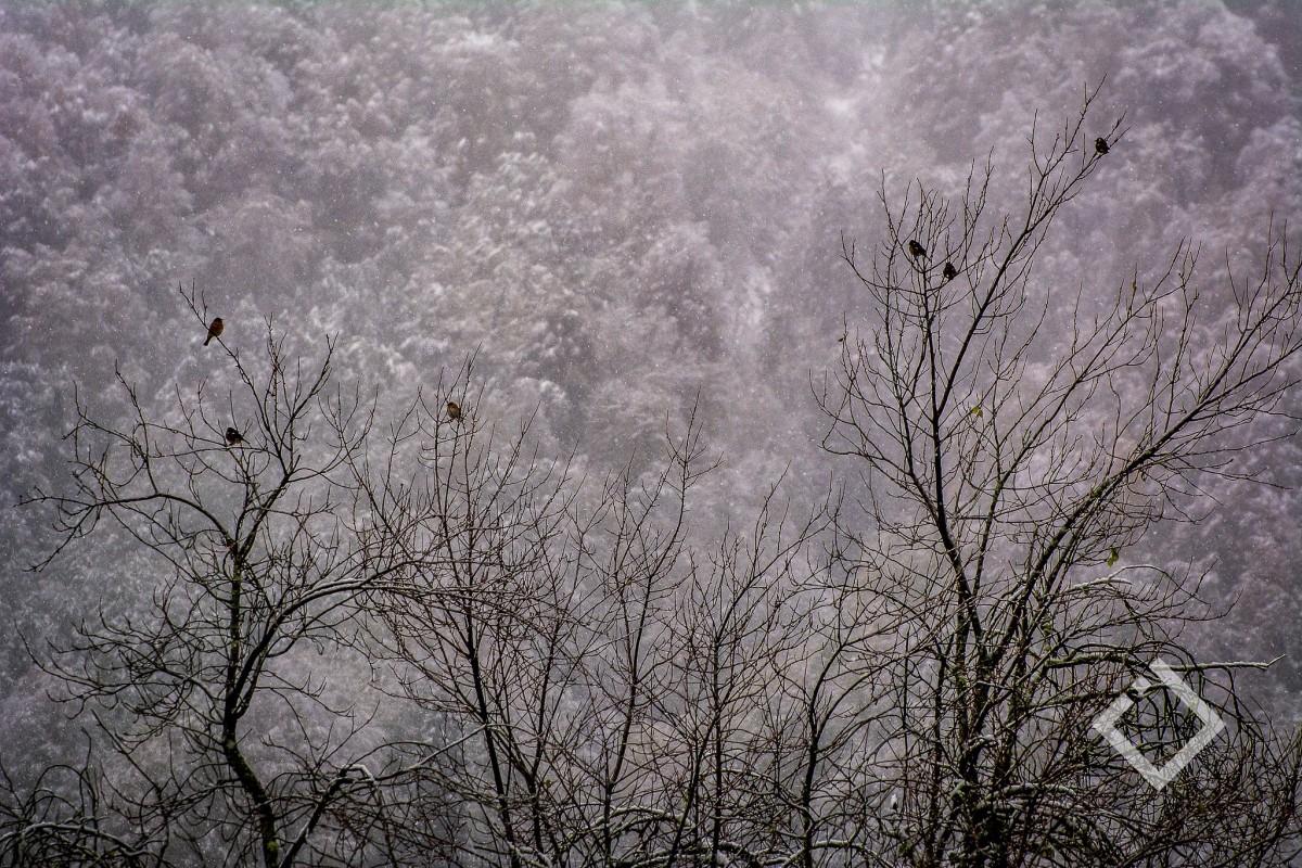 ამინდი, ბათუმი - ხვალ დღის ბოლოს გაწვიმდება, ზამთრის კურორტებზე კი მოთოვს