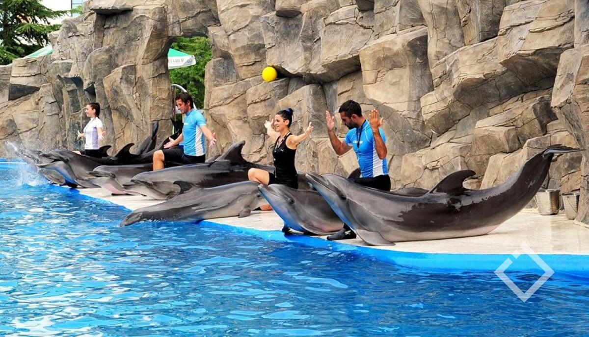 დელფინარიუმი მუშაობას დღეიდან განაახლებს - დელფინებთან ცურვა დროებით შეუძლებელი იქნება