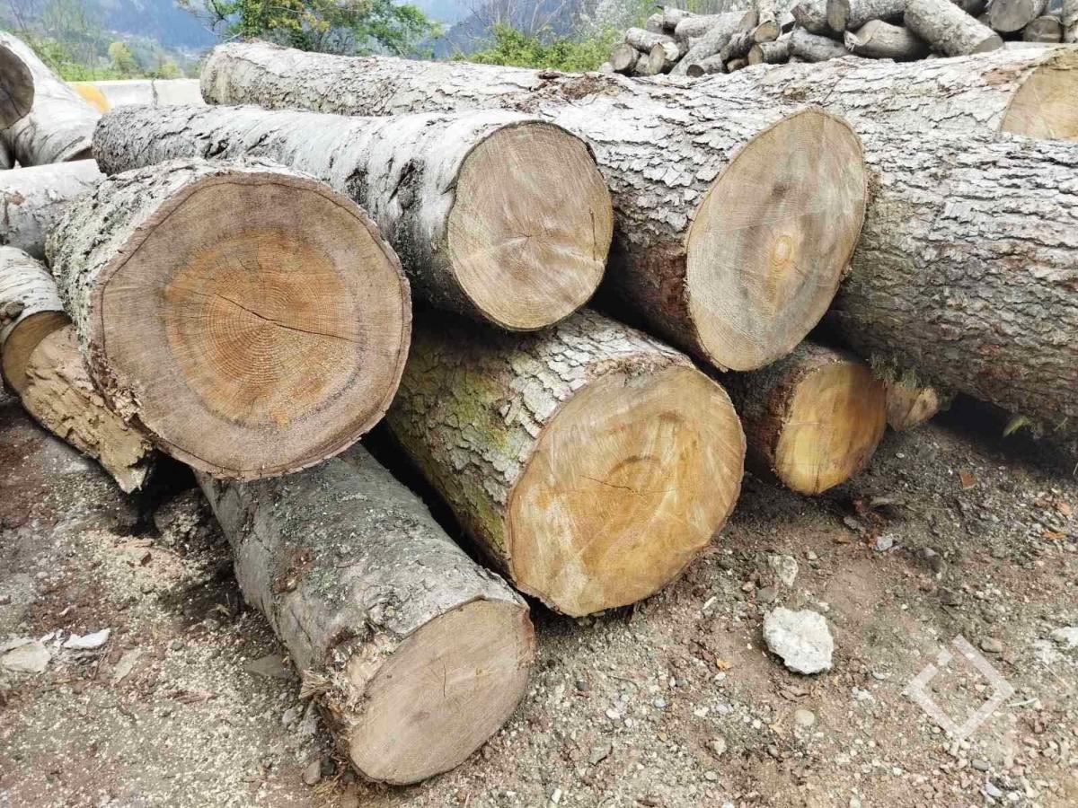 აჭარაში უკანონო ტყითსარგებლობის 11 ფაქტი გამოავლინეს